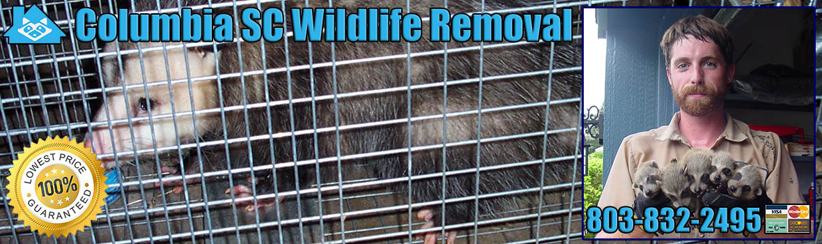 Columbia Wildlife and Animal Removal